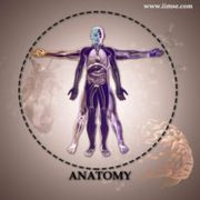 Anatomy Course Online Classes By Anatomy Expert